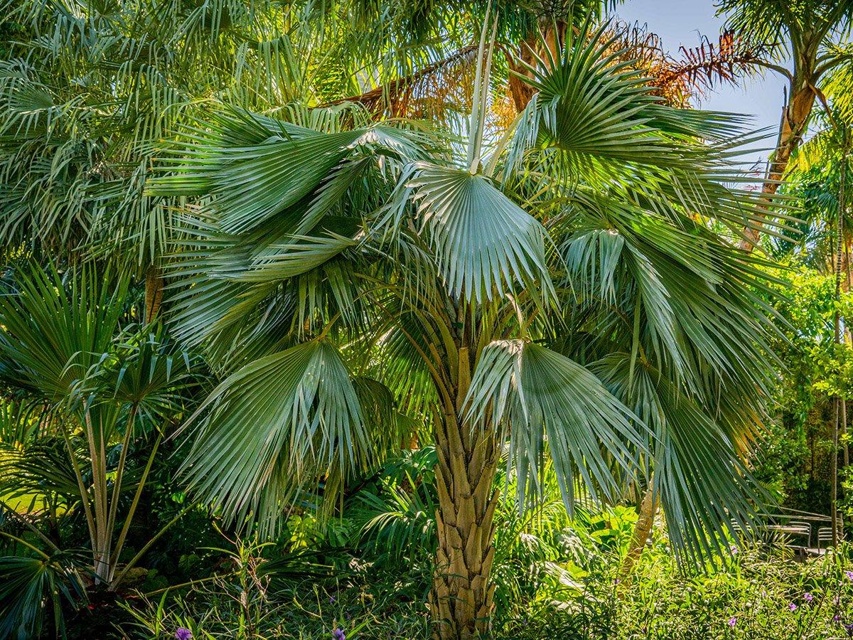palm4