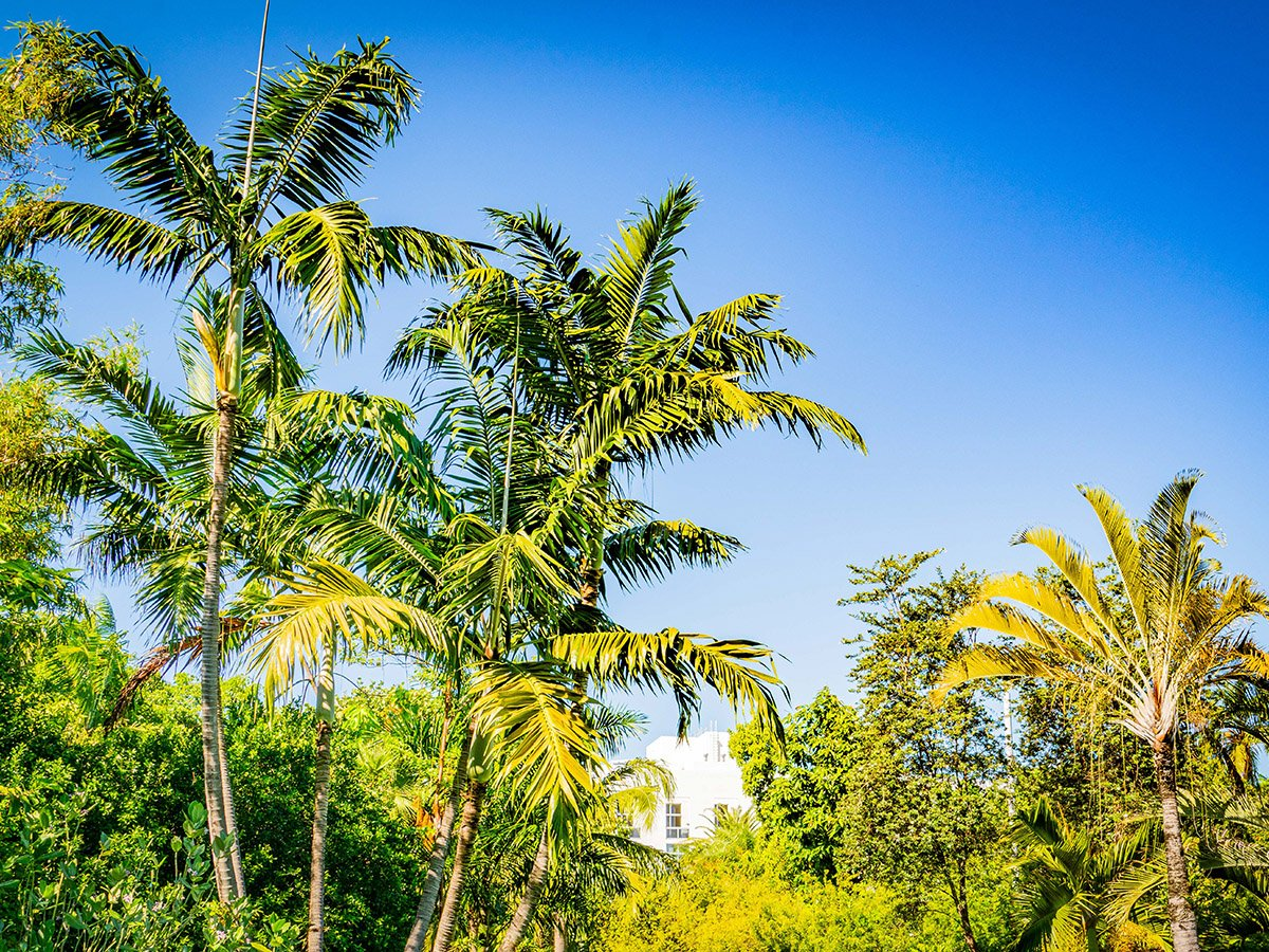 palm5
