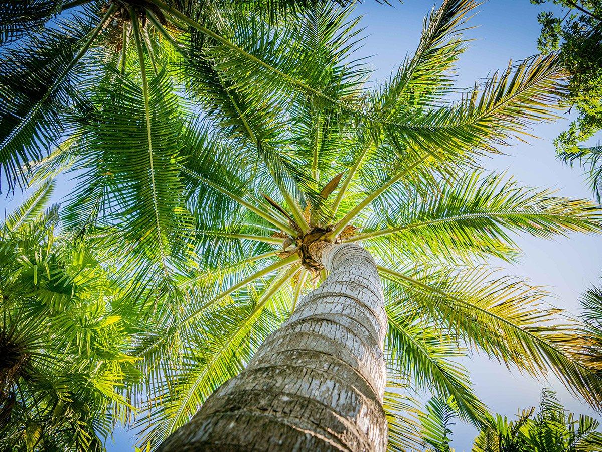 palm8