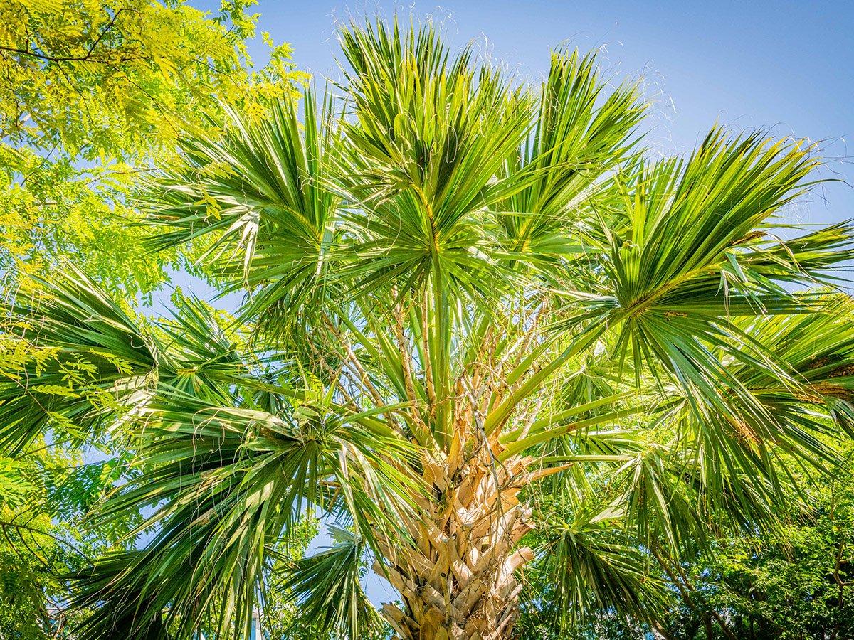 palm garden | miami beach botanical garden